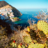 Cactuses in front of Hamlin Cove community view, Avalon, St.Catalina Islland, CA, USA