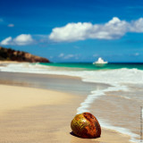Coconut, Culebra Island, Puerto Rico