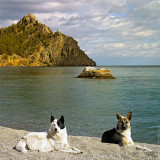 Lake Baikal: Dogs against of Cape Big Belfry