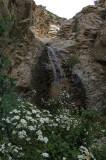 Rubio Canyon - 4/20/08