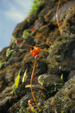 Exotic flowers in Machu Picchu