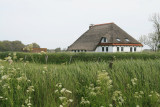Texel.JPG
