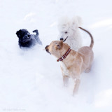 These three don´ t complain about too much snow,