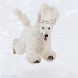 Sometimes she´s just a blur. Hmm, caught her paws ;o)