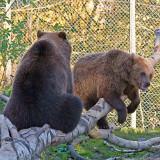 bearcubs at play 900.jpg