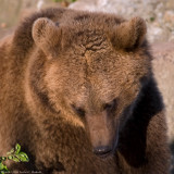bearcub 2 900.jpg