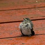baby bird waiting 900.jpg