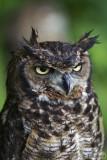 An owl...