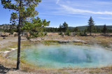 A Thermal Spring Yellowstone  _DSC8140.jpg