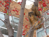 ISU Winter Squirrel by the Liberal Arts Building IMG_1703.jpg