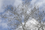 Mid March Tree and Sky _DSC0657.jpg