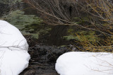 Des Winters Ende _DSC0749.jpg