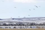 Camas NWR birds_DSC1005.jpg