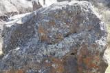 crustose lichen on a rock _DSC1223.jpg