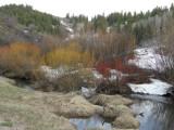 beaver pond made from west fork rapid creek P4230122.jpg