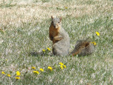 ISU squirrel girl P1020515.jpg