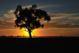 Echuca Autumn sunset