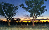 Echuca bush sunset