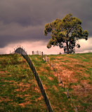 Tree by the fences ~