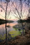 Lake Tyers waters edge ~~