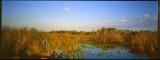 Everglades002.jpg