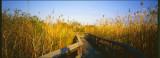 Everglades004.jpg