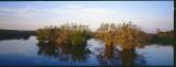 Everglades008.jpg