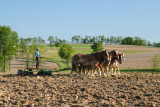 Amish plowing.