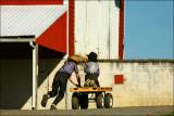 Amish boys with wagon. Near Washingtonville, Pa.