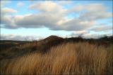 Centralia,Pa. Tall Grass.