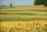 Spring fields near Elysburg Pa.