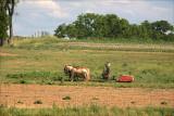 Three Horse Team. Near Washingtonville, Pa.