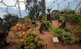 Eden Project 17