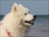 Blanca at the Beach