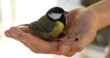 Fugl i hånden