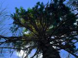 TreeOnPath.jpg