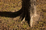 Tree, Roots and Leaves - December
