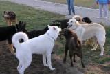 North Jefferson City Dog Park