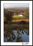 Vineyard and Pond