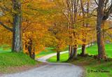 _MG_9788  Golden Leaves