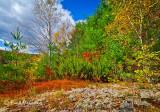_MG_9656  Ausbon-Sargent  Land Trust  -  Enroth   #2