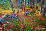 _MG_9647 Stonewall in the Woods