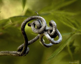 Nature's Knot 3-12-11