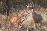 Big Buck lil buck