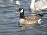 Oiseaux divers - Various Birds