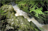 Tollymore Forest Park - River Shimna