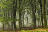 Beech reserve, summer- Beukenreservaat, zomer 1