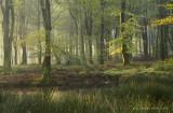 Bosven, vroege herfst - Forest fen, early autumn 2