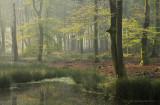 Bosven, vroege herfst - Forest fen, early autumn 1
