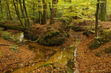 Sprengen, herfst - Brooks at autumn